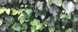 home slider ivy