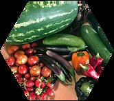 vegetables hex.png
