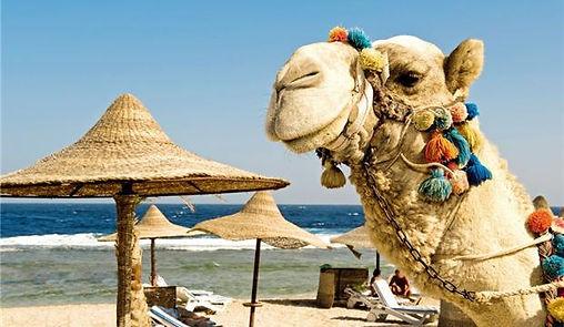 Животные Египта