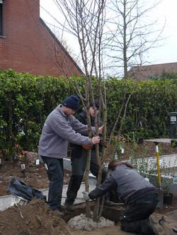 aanplanting van bomen