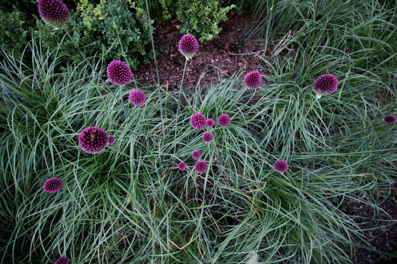 plantencombinatie