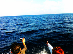 Early in the mornings we are looking for dolphins