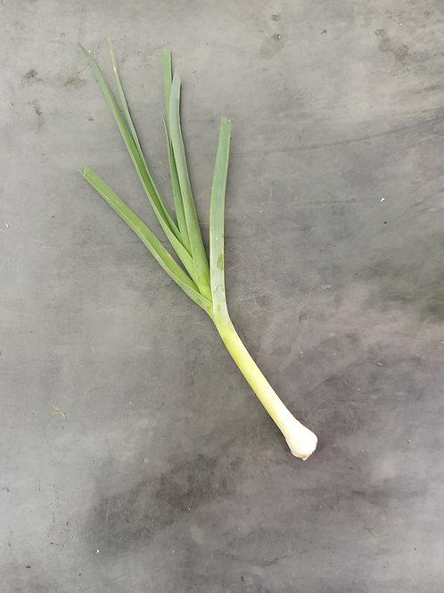 Alho-poró orgânico