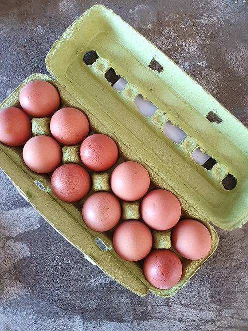 Dúzia de ovos orgânicos