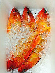 地元の漁師から仕入れた新鮮な魚
