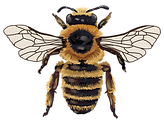 bee.png