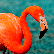 flamingo_Square.png