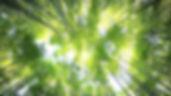 20191029-160047-green-trees-1024x576.jpg