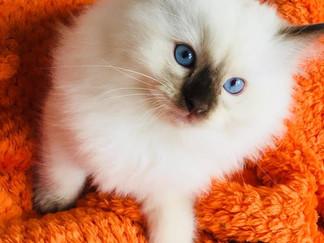 blue eyes2.jpg