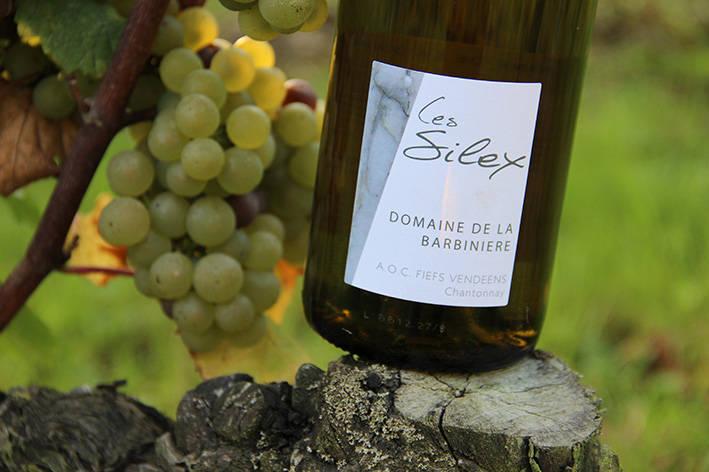 bouteille Silex dans les vignes à la Barbinière