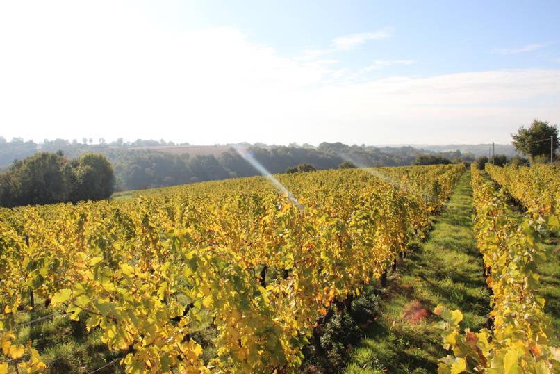 vignes du Fuiteau à Chantonnay