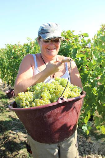 Séverine récolte les raisins à la main