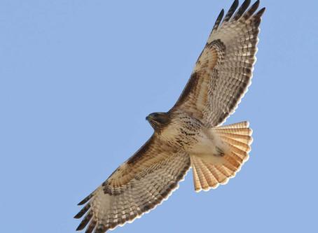 Birds of the Sierra's