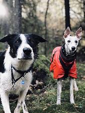Bergen Hundebarnehage