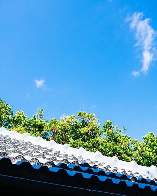美ら民家はフクギに守られています_._フクギは、台風や家事や厳しい西日から家屋を