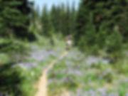 Purple Trail.jpg
