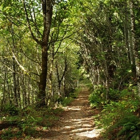 Talor Mountain Trail