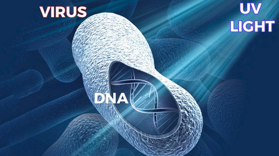 UV DNA.jpg