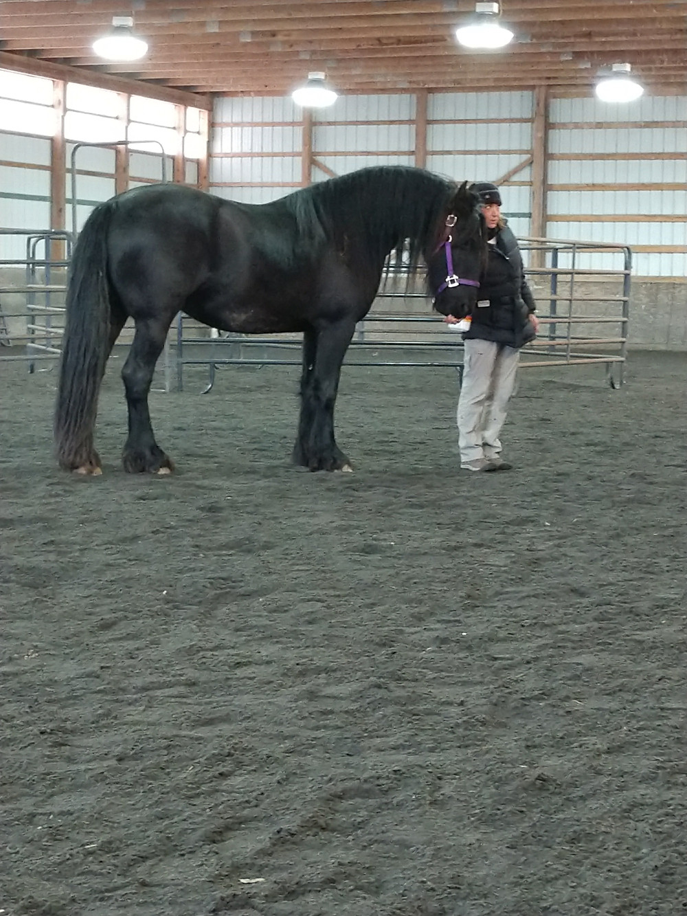 Aerow the Friesian learning how to deal with crowds