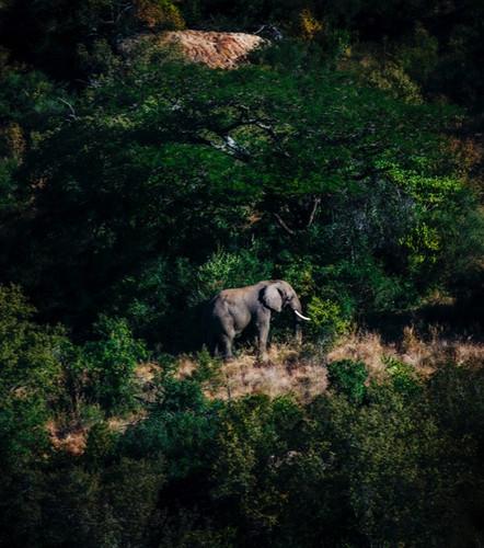 esiweni_luxury_safari_lodge_south_africa