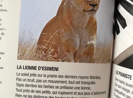 La lionne d'Esiweni / Esiweni's Lioness