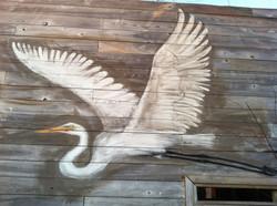 egret (close-up)