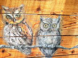 screech owl parents