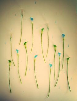 Epitaph Lillies