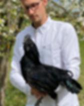 Ayam cemani .jpg