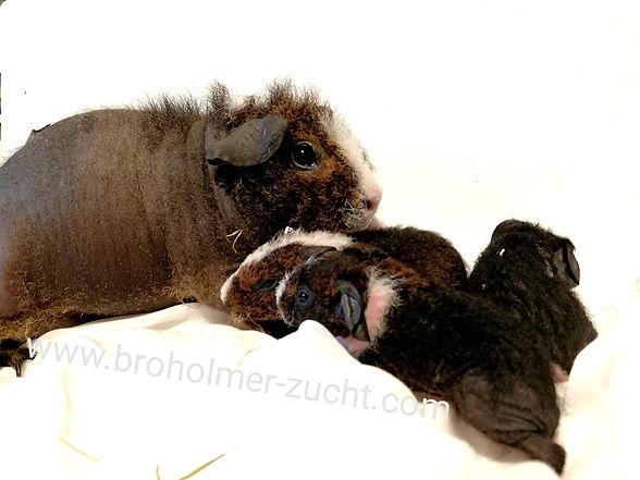 Skinny Pigs Werwolf