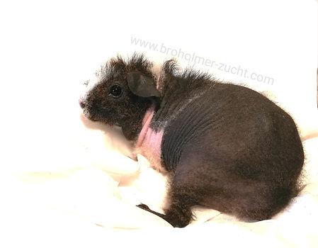 Skinny Pig Werwolf.jpg