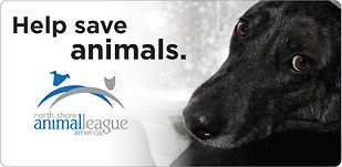 north-shore-animal-league-america (1).jp