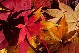 autumn-200293_1920.jpg
