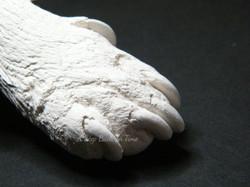 3D cast dog paw