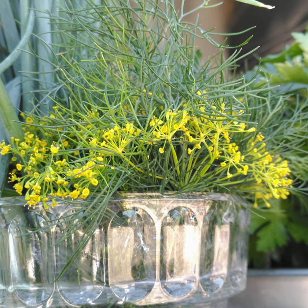 Mixed Herbs at the Farm Stand
