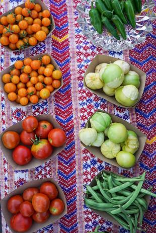 tomatos pf 2020.JPG