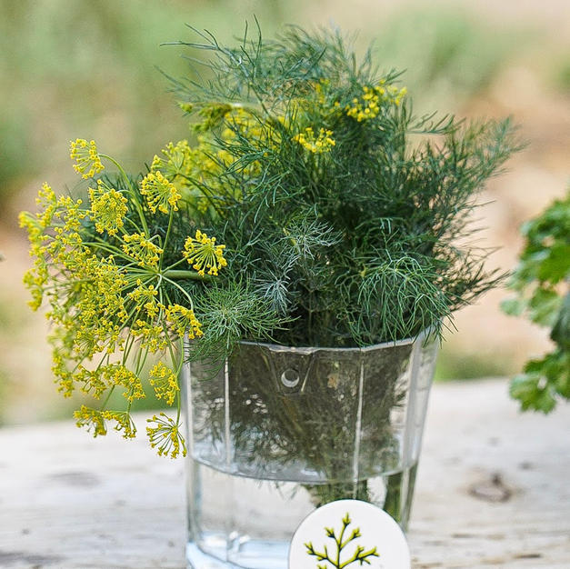 Dill at the Farm Stand
