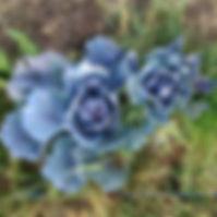 IMAG5999_edited.jpg