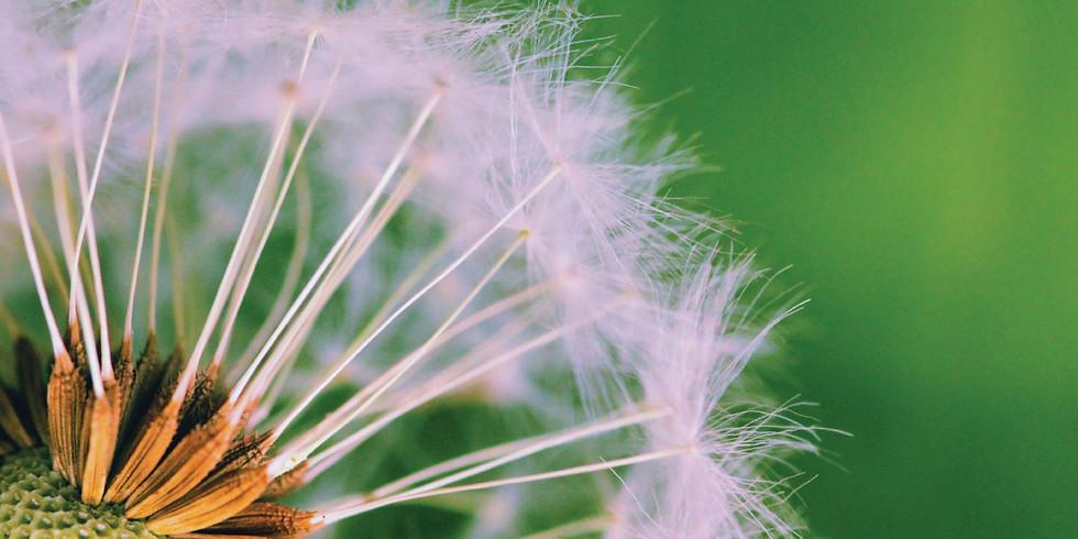 Seed Sovereignty & Equinox Celebration