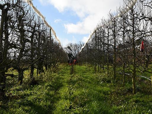 Visite de l'exploitation Les Pommes du Haut Berry