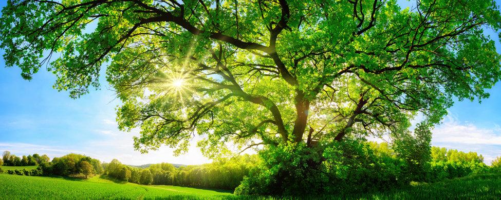 Tree-enviromental.jpg