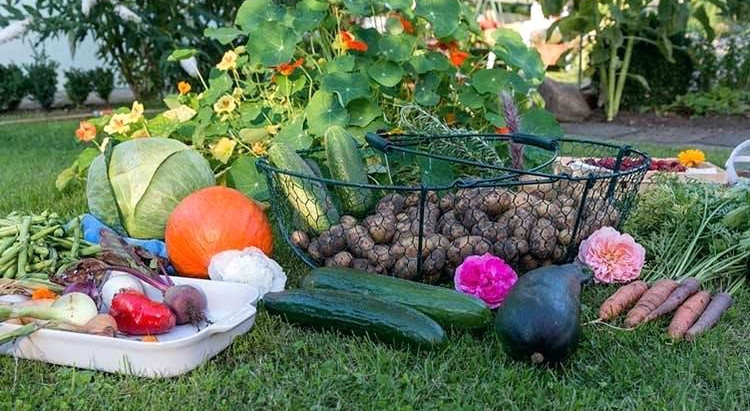 Growing - Notes for the Autumn Garden
