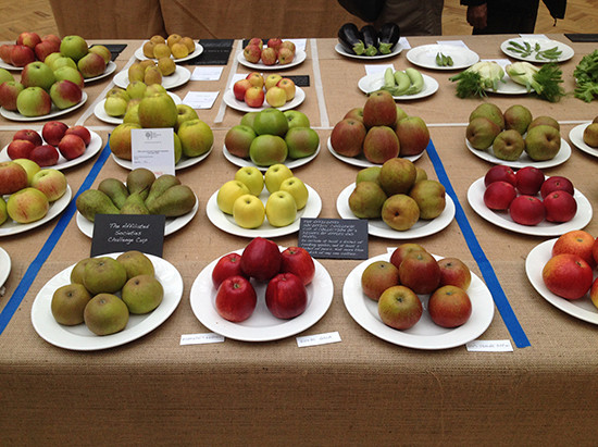 Fruit for Showing and Judging