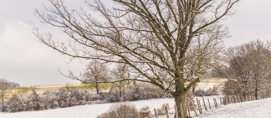Winter Scenes and More
