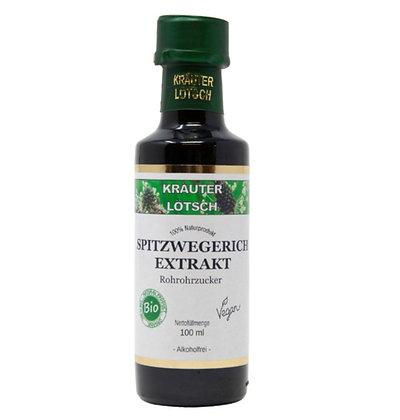 Spitzwegerich Extrakt Zucker BIO 100ml