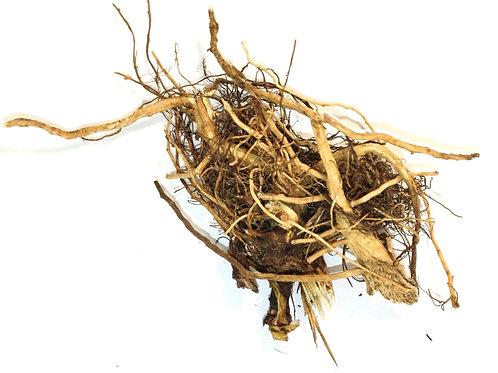 Sonnenhut Wurzel (Echinacea)