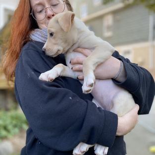 Dogsitting Duty: Pippy