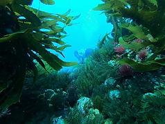 Diver Observations Survey