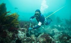 Invasive Sea Urchin Management [2].jpg