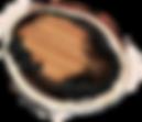 Blacklip Abalone Photoshop Drawing 2.png